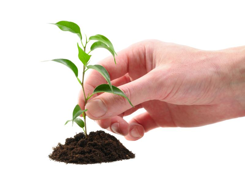 112195-800x600-free-tree-seedling-1